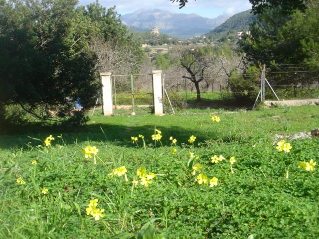 So in etwa wäre es doch schön: Ein grünes Grundstück mit herrlichem Blick.